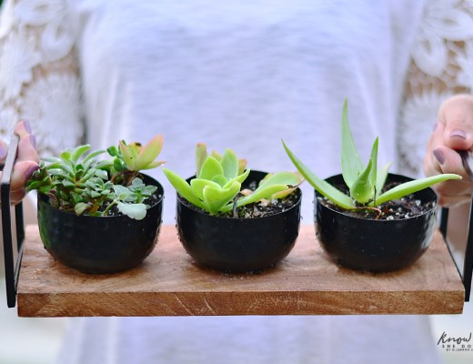 Simple Gifts Plants 3