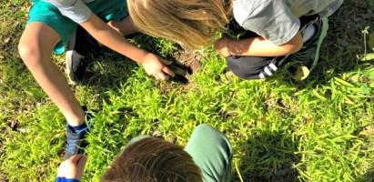 Outdoor Classroom Project: Sour Flower (Grass) Spritzer