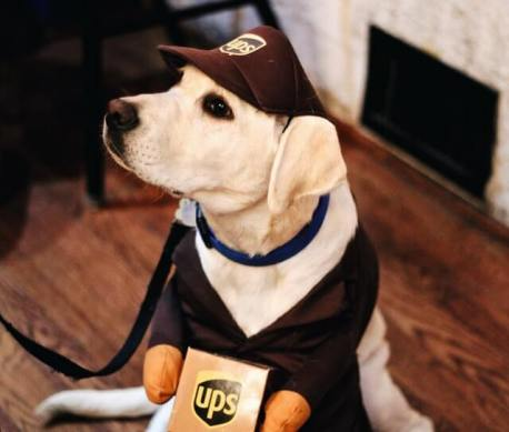 Figure 25 Best Dropshipping Products Halloween Pet Accessories