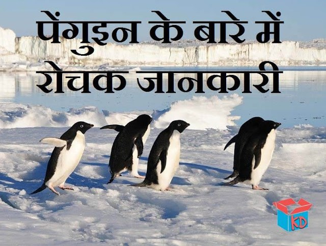 information about penguin in hindi