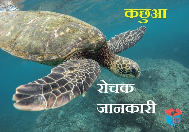 tortoise information in hindi