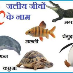 Animals Archives Page 6 Of 13 Knowledge Dabba