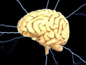 Fascinating human brain