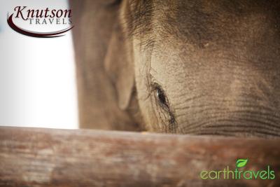 Elephant Peek earthtravels