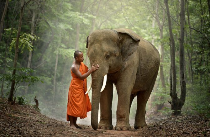 Monk and elephant Thailand