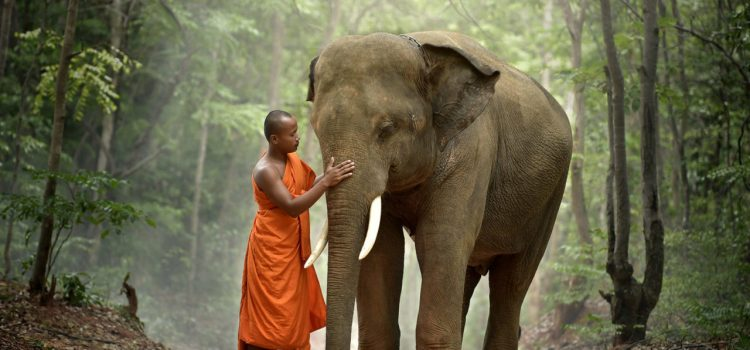 Monk and elephant Thailand