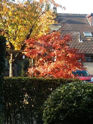 herfst-tuin