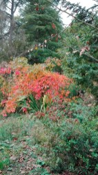 Arboretum-herfst-12