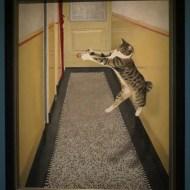 Katten-04