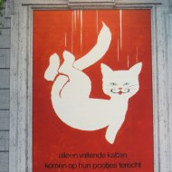Katten-12