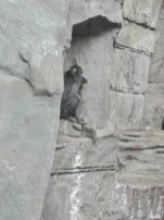 Antwerpen-dierentuin-001