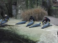 Antwerpen-dierentuin-010