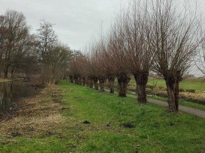 bomenlaantje-januari