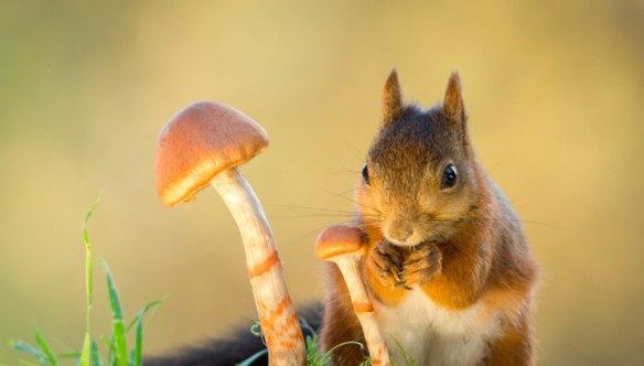 geertweggen-eekhoorns