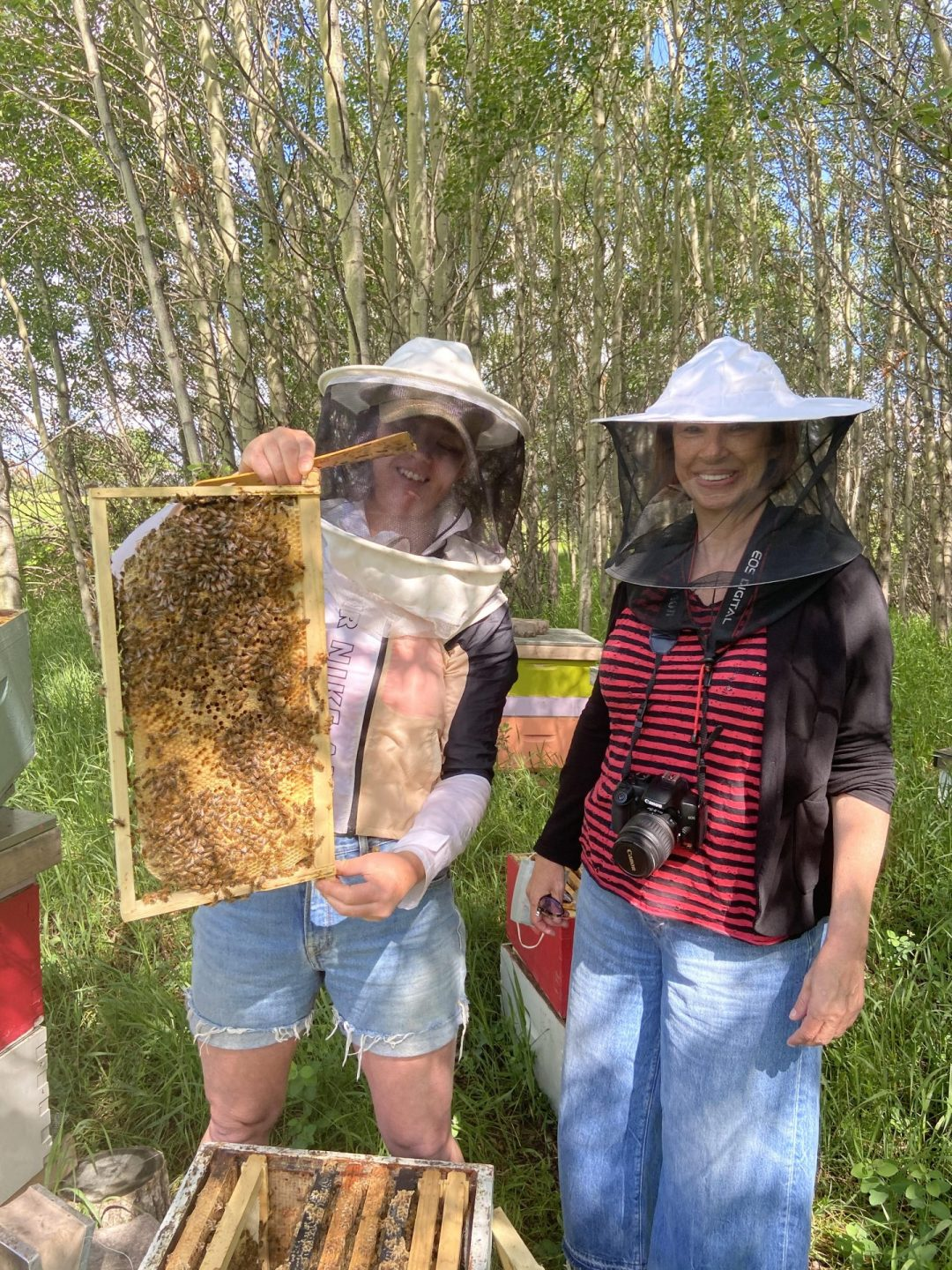 Beehives Tour