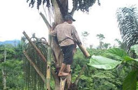 Petani Aren Mataiyang Perlu Disentuh Pemda KSB
