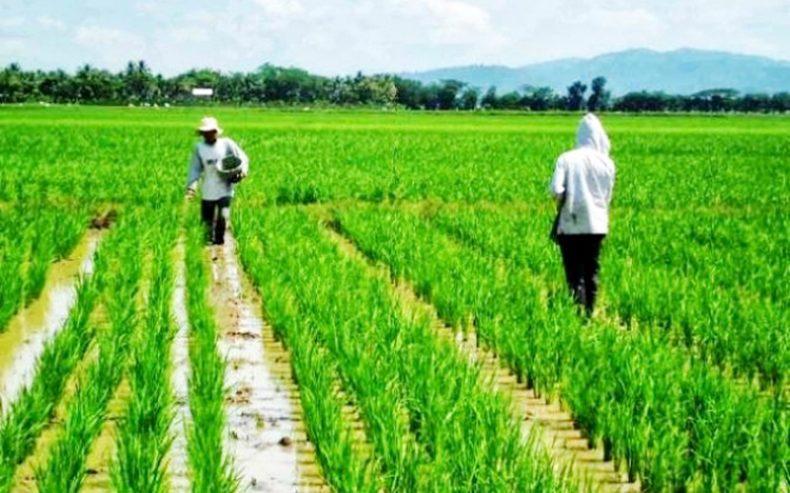 Petani Butuh Penyuluh Pertanian Handal
