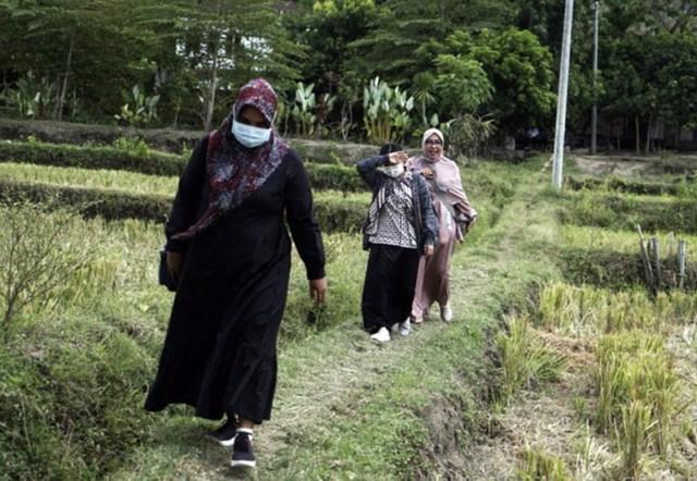 Guru Honorer Sumbawa Berjalan di Pematang Sawah Untuk Bertemu Gubernur NTB