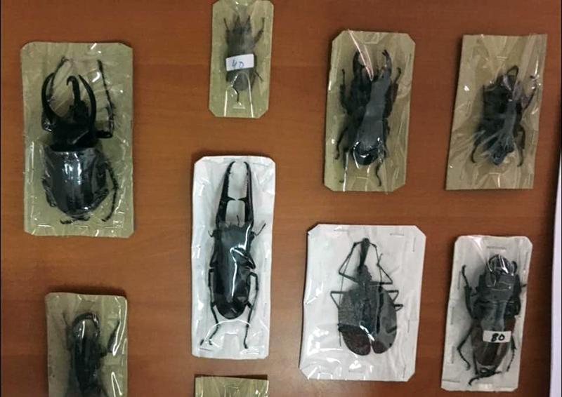 Bisnis Pengawetan Serangga Mampu Raup Pundi-pundi Dollar