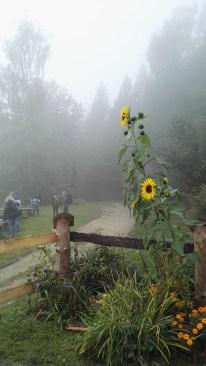 Okoliczna flora we mgle