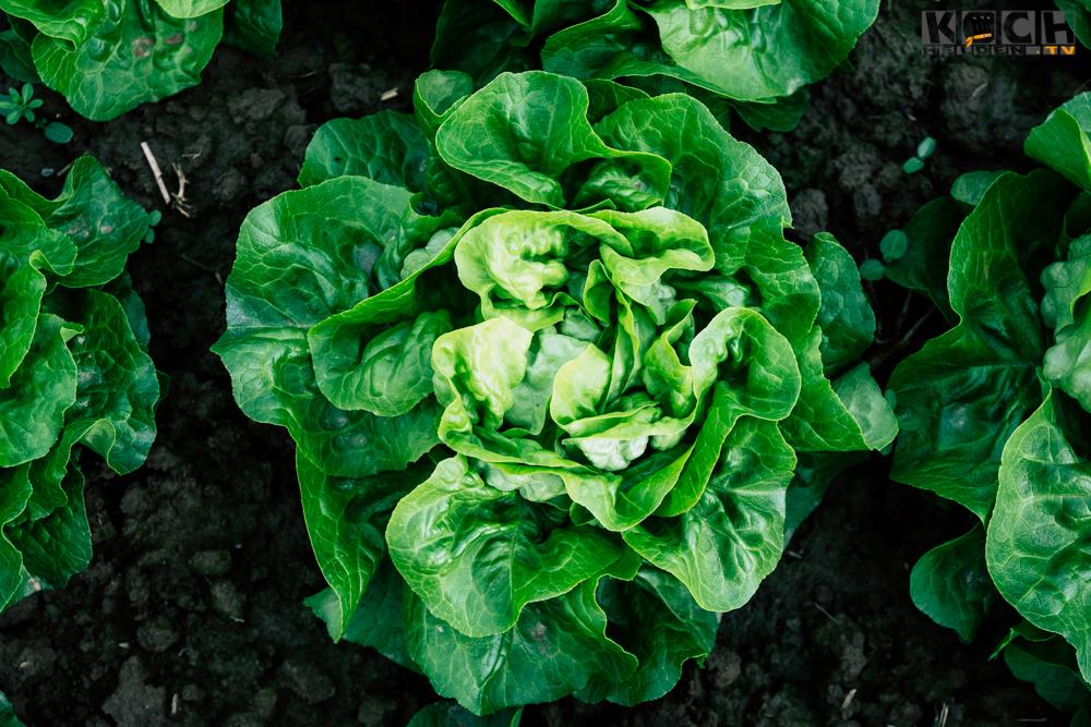 Salatkopf - www.kochhelden.tv