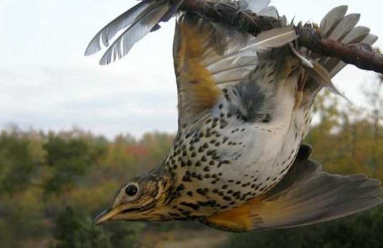 France bans controversial bird hunting techniques