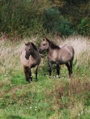 paarden bij nieuws