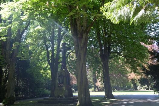 Licht und Schatten auf dem Kölner Südfriedhof, Bild: Thomas Salditt
