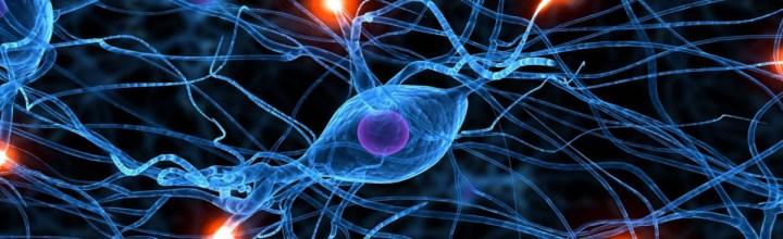 Onderzoek regulering neurale stamcellen geeft inzicht hersenziekten