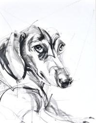 Tekkel / Dachshund   charcoal and acrylic on paper   70x80 cm