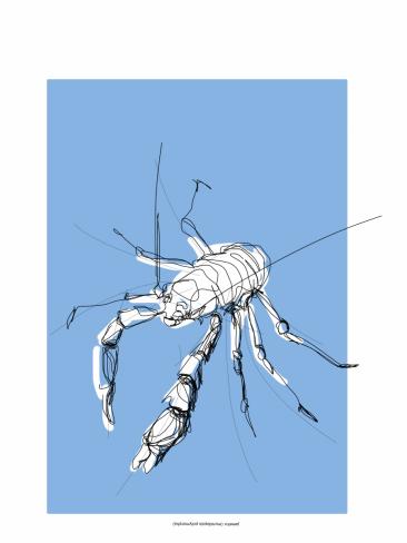 Crab Jameo Agua Lanzarote ES | digital drawing | prints available