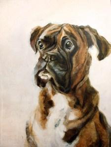 Boxer dog Joey