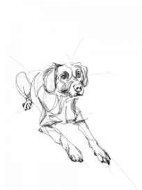 Dog Xamber| Digital drawing, print available A4