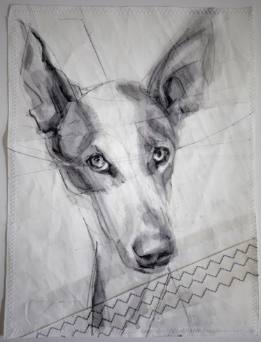 Portrait of Lucky Podenco Dog
