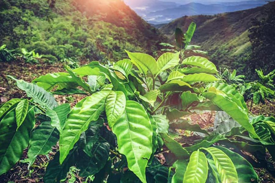 Koffiemasters Biologische Koffie