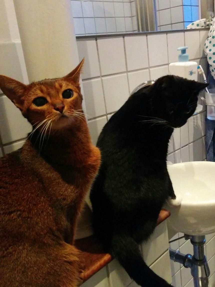 Fie og Jara_kø til håndvasken