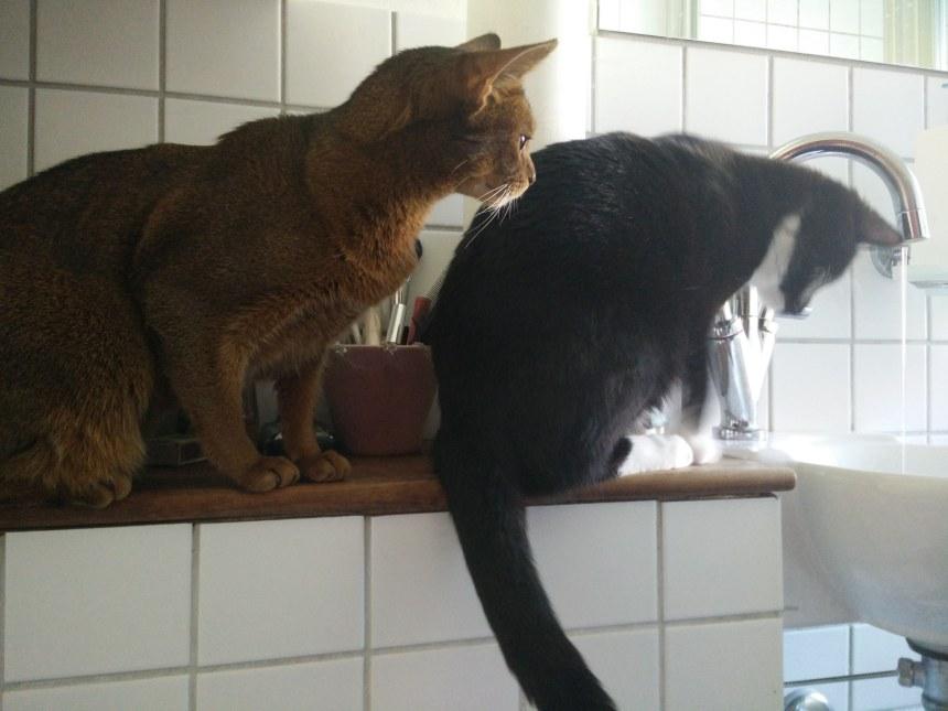 Fie og Jara drikker vand