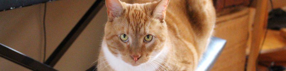 5 tegn på, at en kat godt kan lide dig