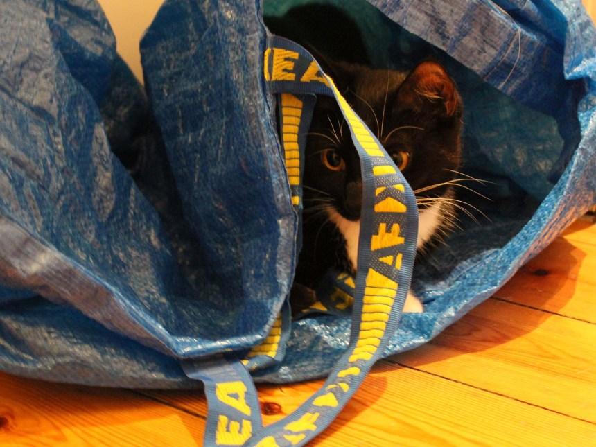 Kattelegetøj_Fie i Ikeanet