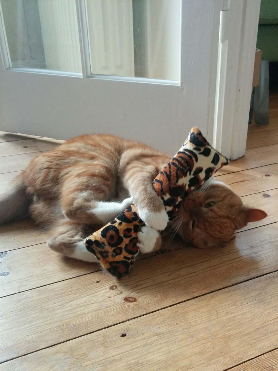 Aktivér din kat - kattelegetøj