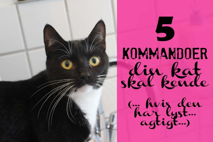 5 kommandoer