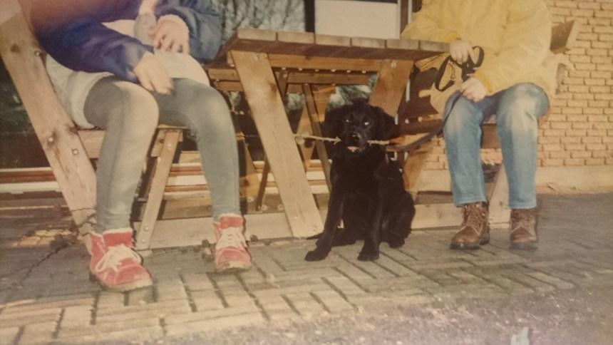 Bjørn - verdens bedste labrador