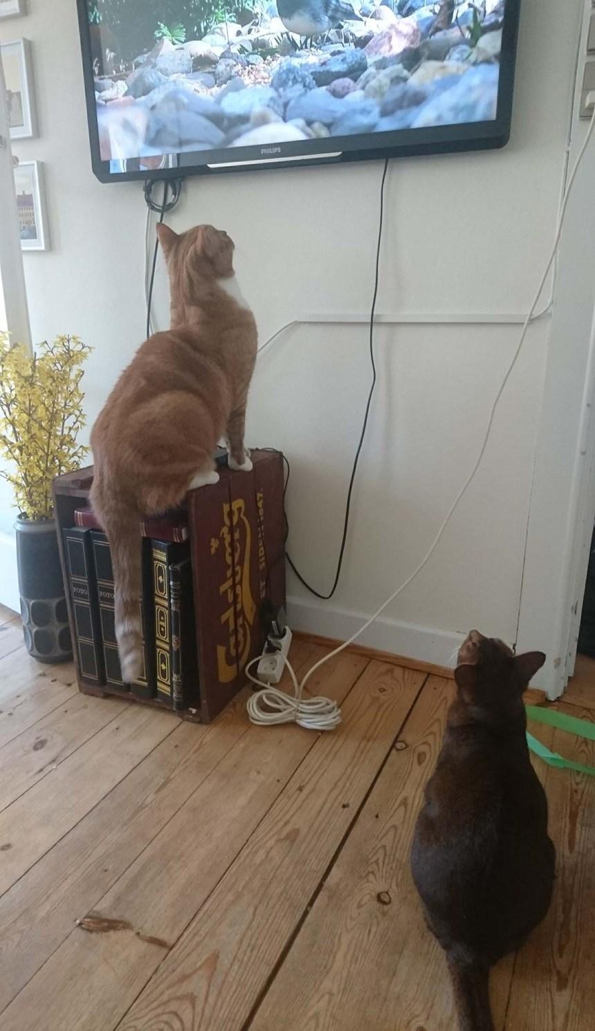 Cat tv Stoffer og Jara