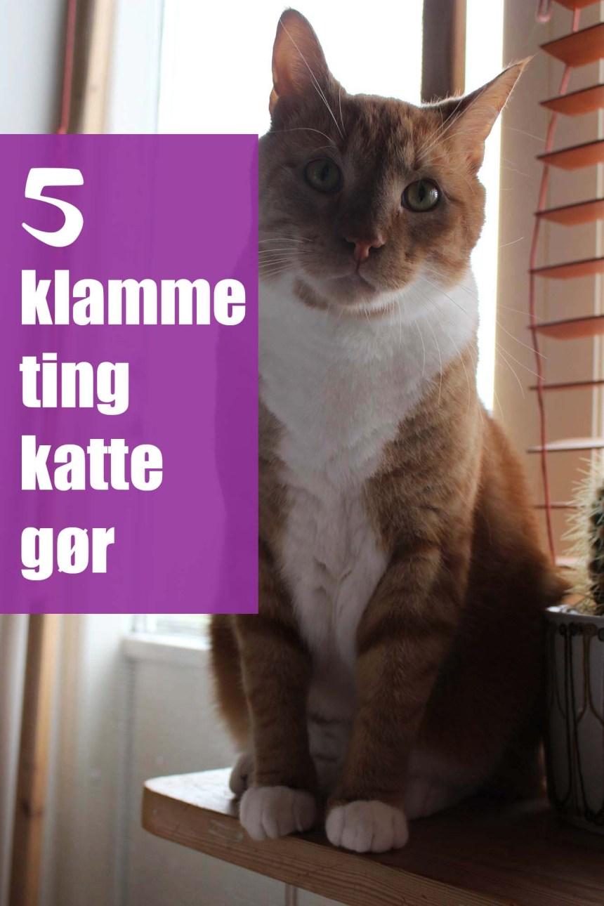 5 klamme ting katte gør