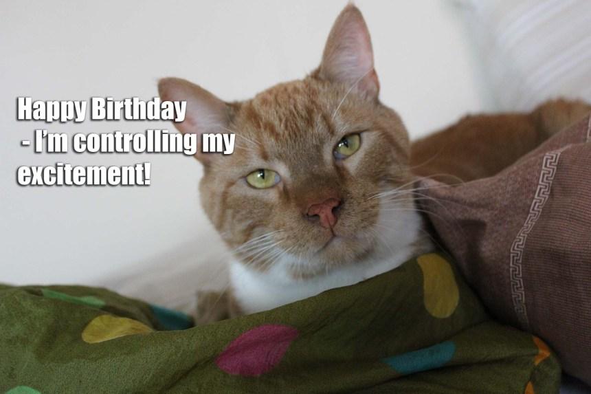 Tillykke - happy birthday
