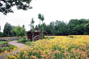 (ネーブルパーク)キスゲと水車小屋