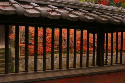 鷹見泉石記念館の紅葉