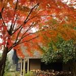 (ネーブルパーク)旧茂田家住宅と紅葉
