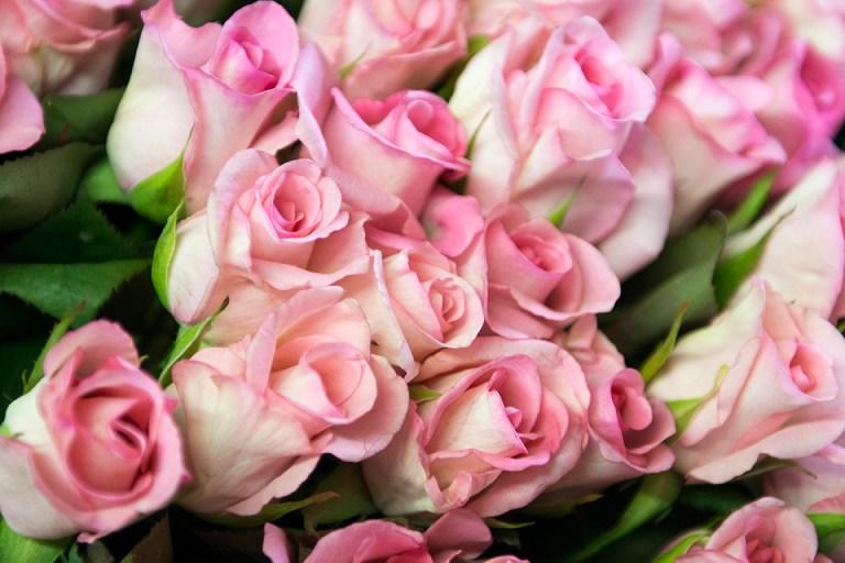 城県花卉(かき)銘柄産地指定 バラ