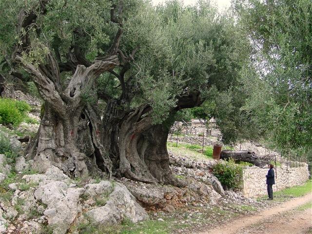 Trees: A Literary Appreciation